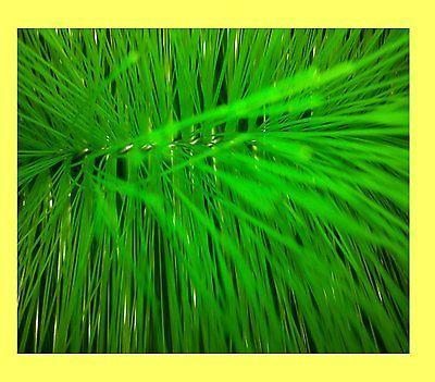 10 Stück Filterbürste grün fein 60 cm lang Teichbürste Koiteich Teichfilter
