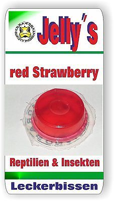 Jelly Food Dragon 20x16gr Fruchtgelee Red Strawberry f Reptilien Käfer Insekten
